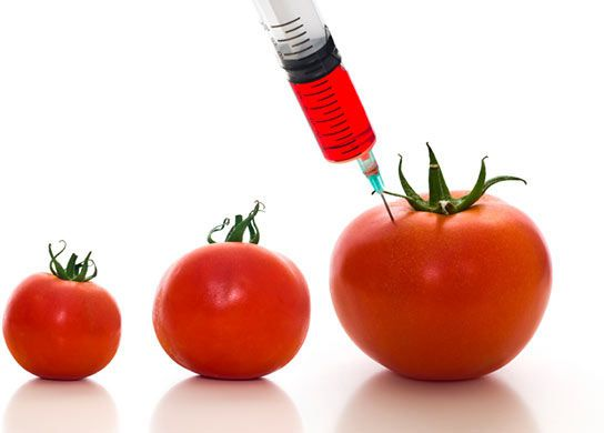GMO – The Boogie Man in Your Food